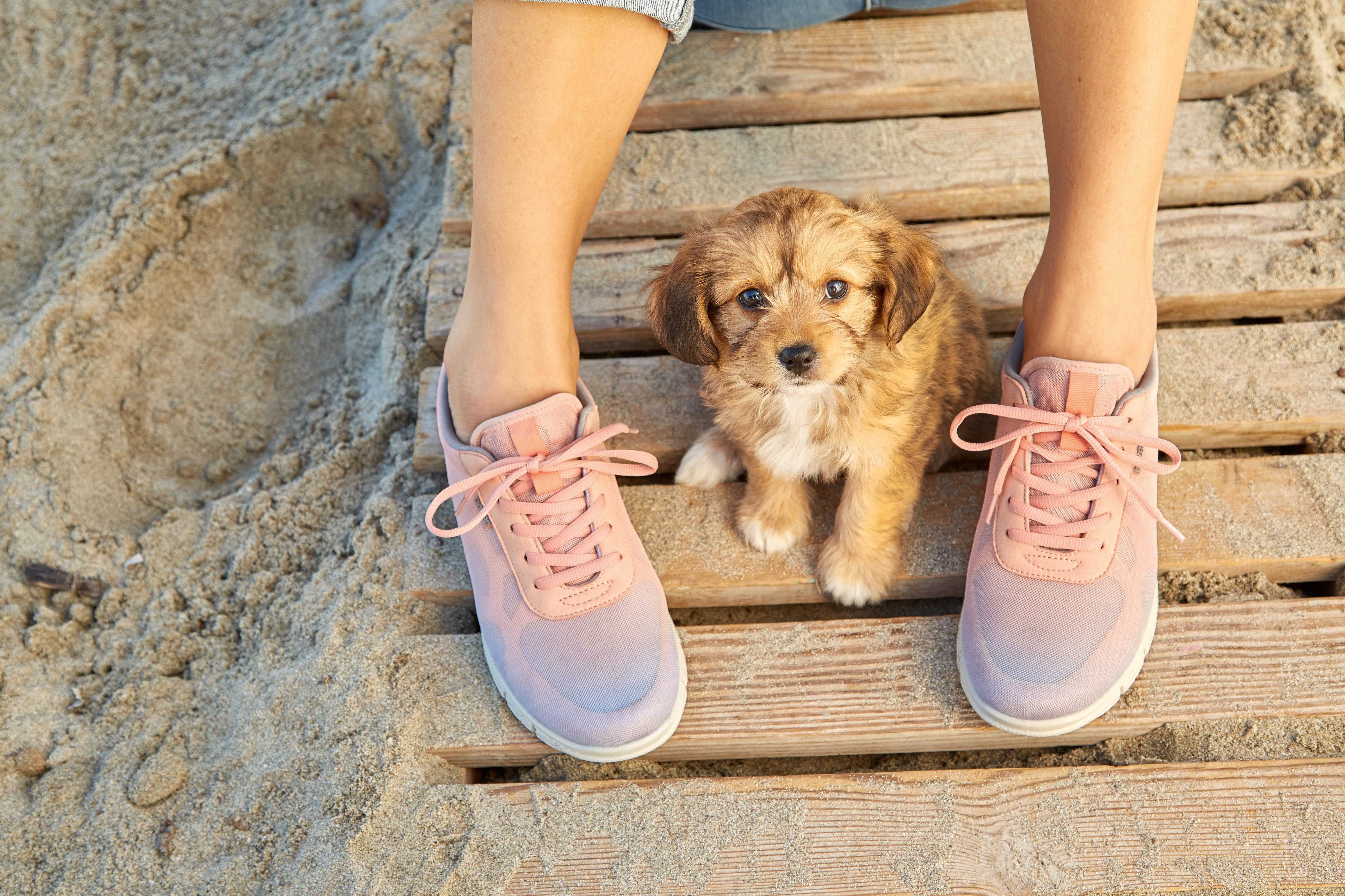 Active Shoes, British made footwear, wide fit shoes, comfortable women's shoes, sports shoes, trainers, gym shoes, dog walking, Hotter shoes, Stellar trainers