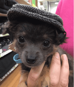 Dog wearing a flatcap hat